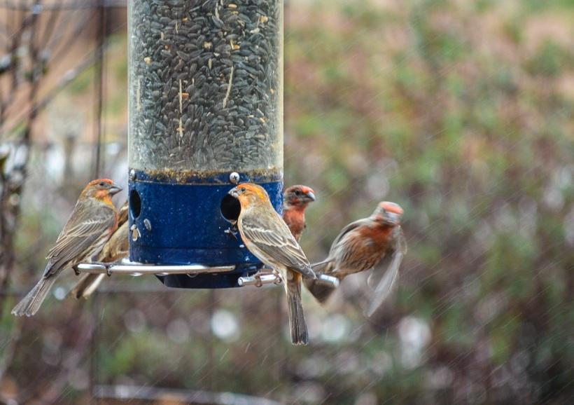 Feeding My Flock