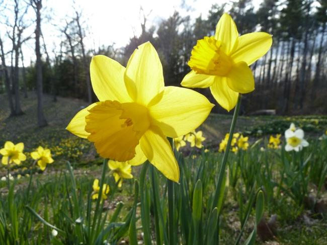 Spring Faces