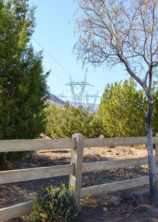 Desert Treescape