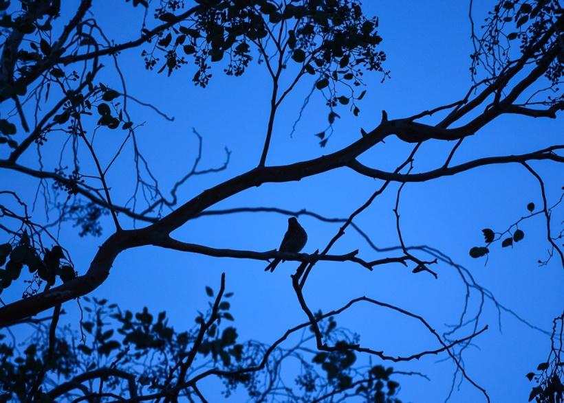 Dawn Song Faith is the bird that feels the light  when the dawn is still dark.  ~ Rabindranath Tagore