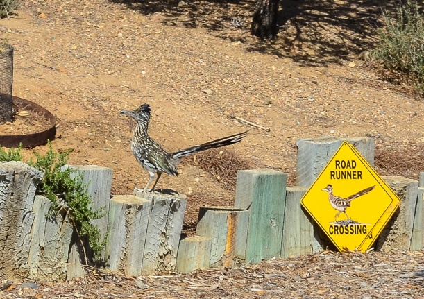 Roadrunner Crossing