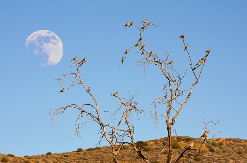 birdmoon