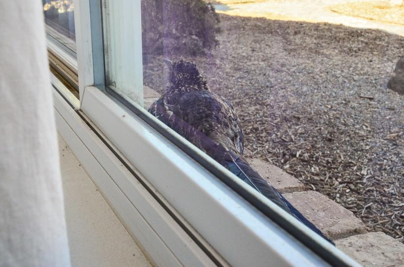DSC_1911 RR window