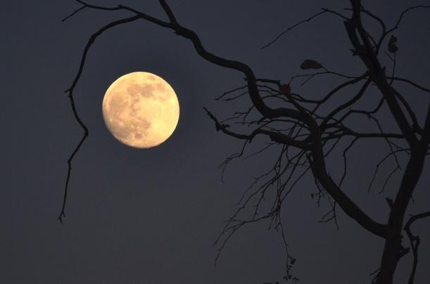 mooncradle