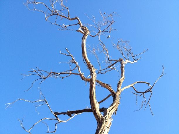 IMG_0930 Sky tree