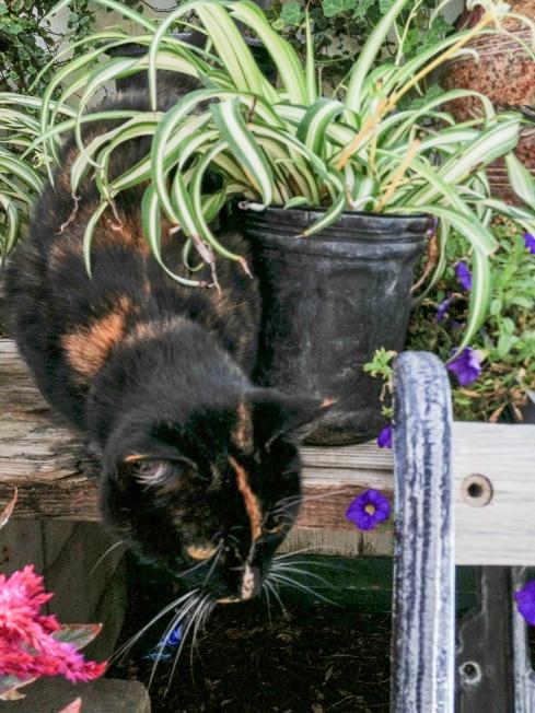 IMG_0970 kitty