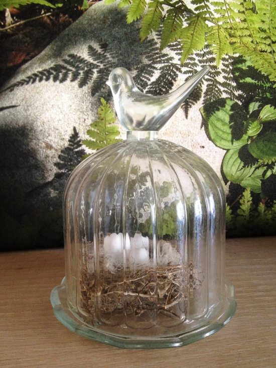 IMG_1039 Nest
