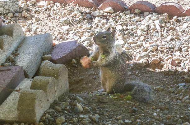 DSC_2656 squirrel apple