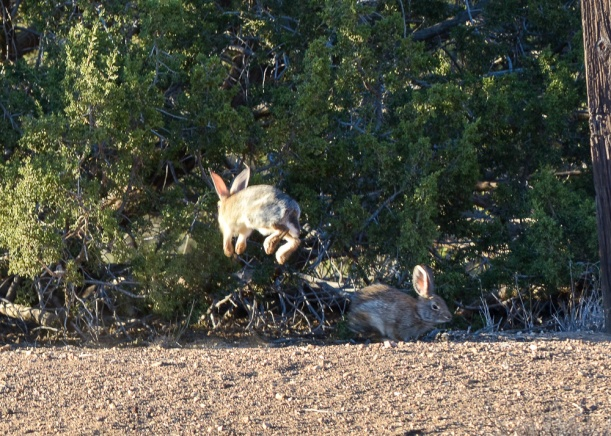DSC_2904 bunny hop