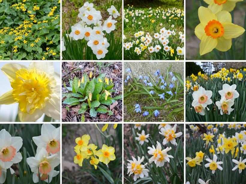 SpringFlowers_LH