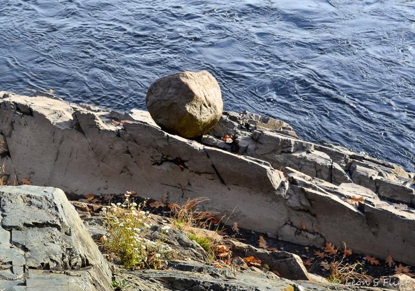 daisy-boulder
