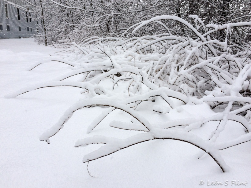 snowy arcs